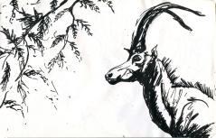 animaux 3006